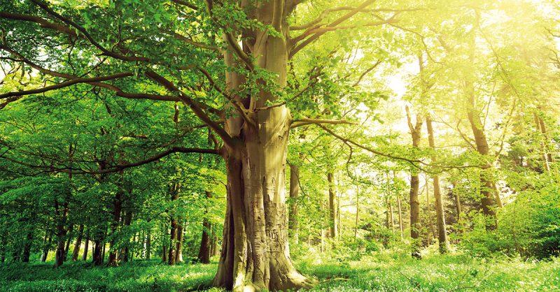 PEFC Waldwirtschaft